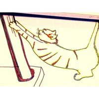 猫友818